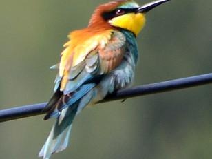 Ces oiseaux multicolores qui égayent notre été.