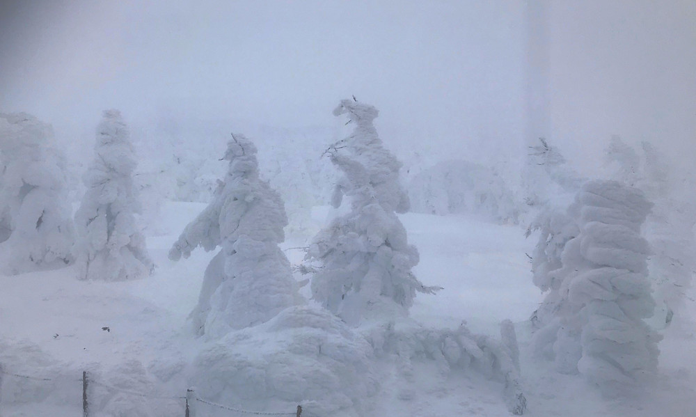 蔵王の樹氷 Zao Snow Monsters