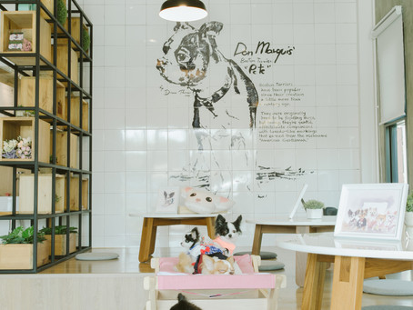 PETSIONATE : Dog Hotel Grooming Cafe