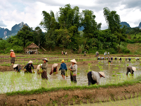 This month in Laos - February 2020