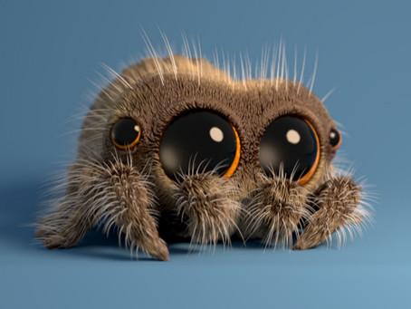 Meet Lucas the Spider