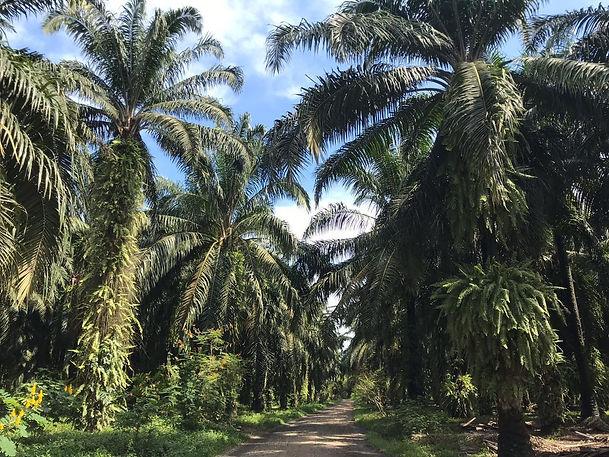 Valle del Polochic-noticias-palma.jpeg