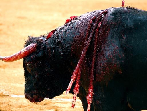 Los toros ¡NO! vuelven a Quito: una reflexión no animalista