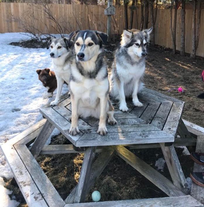 A successful multi dog household