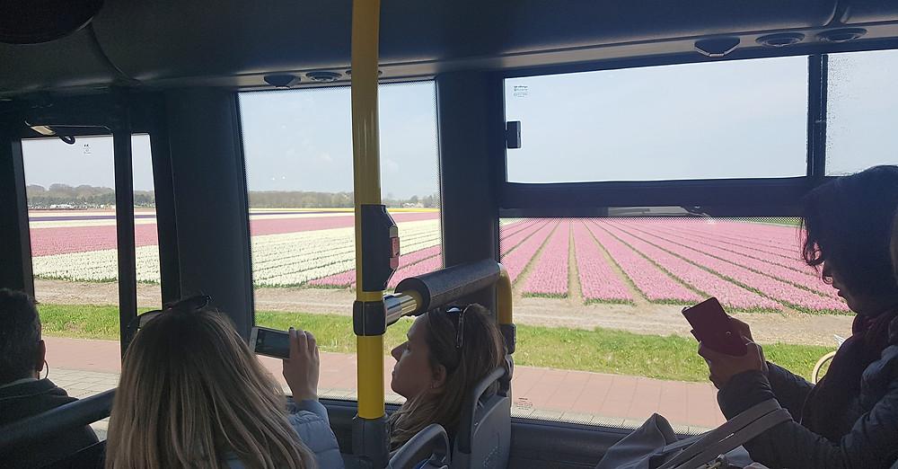 Vista de campos de tulipas, já chegando em Lisse.