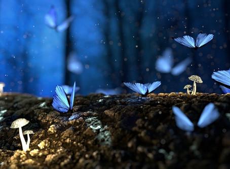 Why Butterflys Dye