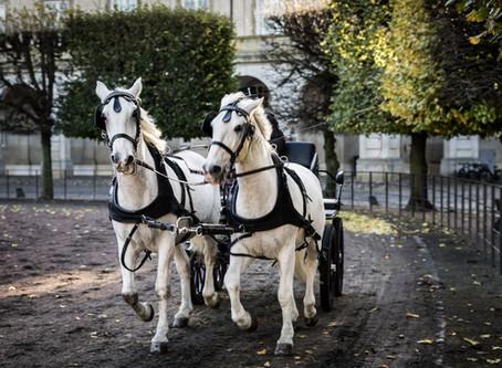 Szívelégtelenség lovaknál