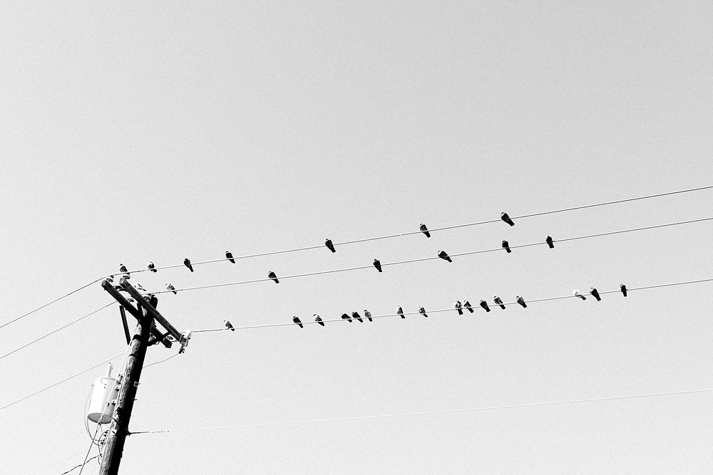 Birds on a wire outside the Wheel Coffee Van at Bancroft Park in Colorado Springs, CO
