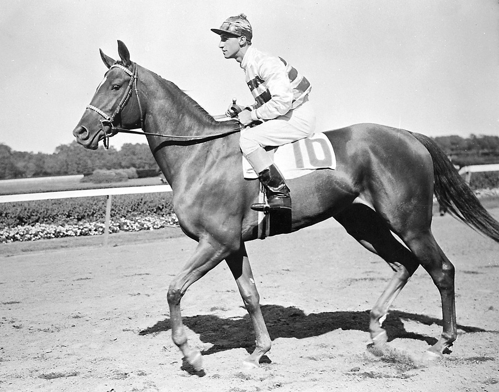 Busher, 1945 Horse of the Year. Daughter of War Admiral.
