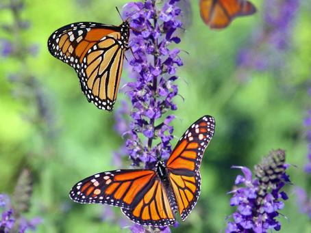 Les battements d'ailes du papillon