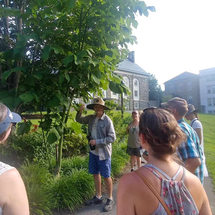 Mike shows off a Chinese parasol tree (Firmiana simplex) that's shown to be hardy in its location