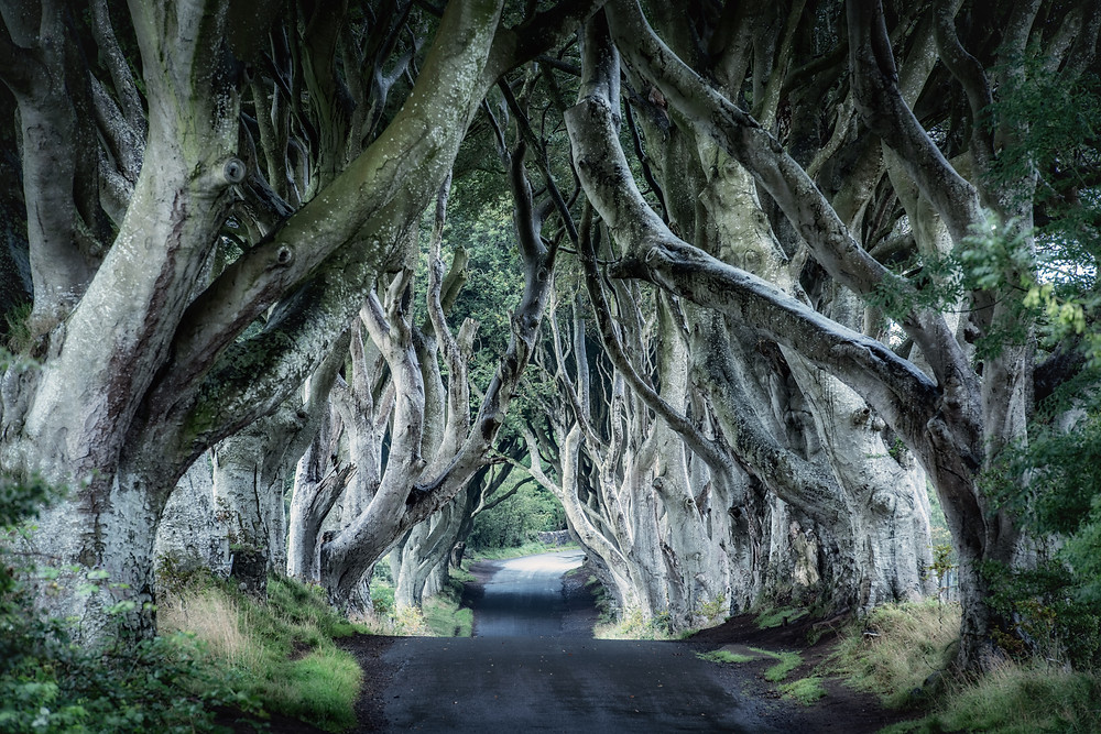 The Dark Hedges in Northern Ireland, UK