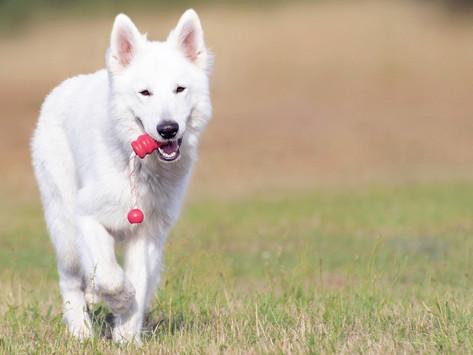 狗狗也有青春期