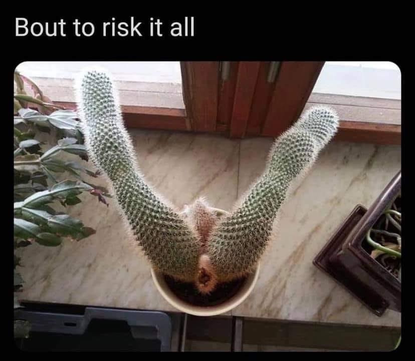 Bout to risk it all. Cactus spread Eagle