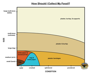 A chart showing what collection materials you should use based on fossil size and condition