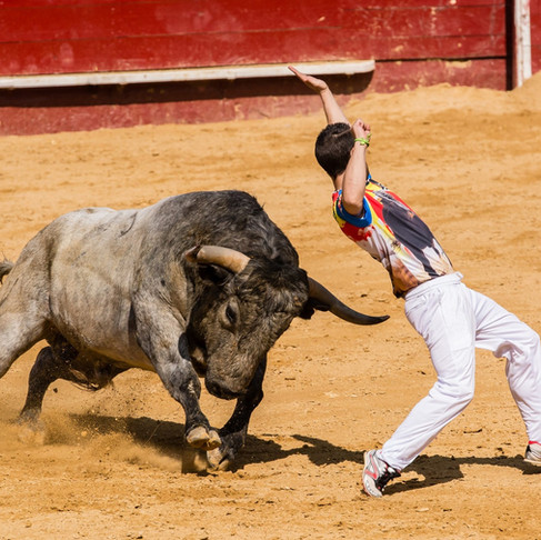 Coronavirus Fears Lead to 21 Bullfighting Events Being Canceled Saving 120 Bulls