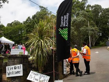 Ōwairaka/Mt Albert tree war heads to High Court as Auckland citizens take on Tūpuna Maunga Authority
