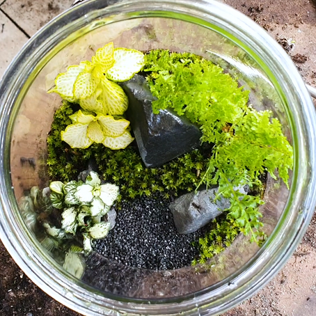 How to make Terrarium? Easy decoration Item for House