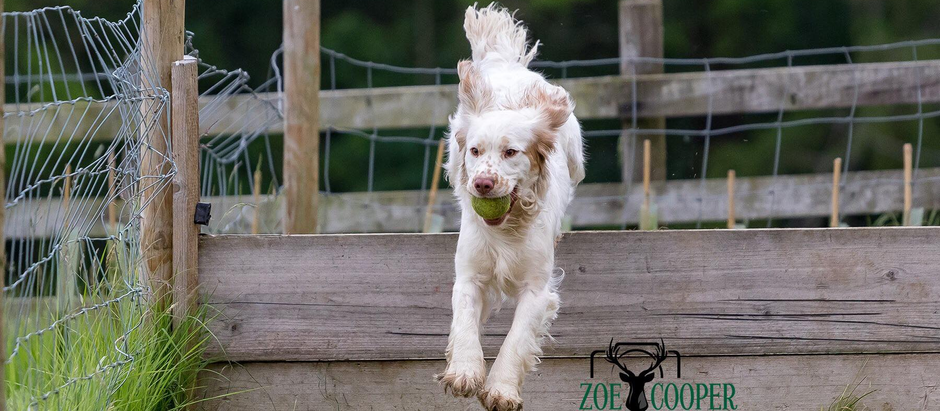 A weekend of training at Dog Tree farm