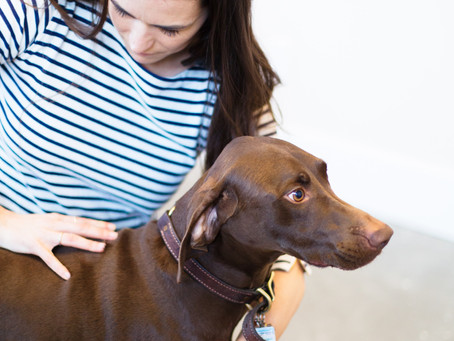 What is Animal Chiropractic?
