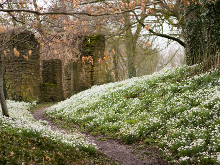 8 of the best places to see snowdrops in Gloucestershire