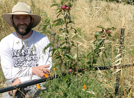 Agriculture Lingers in West Contra Costa