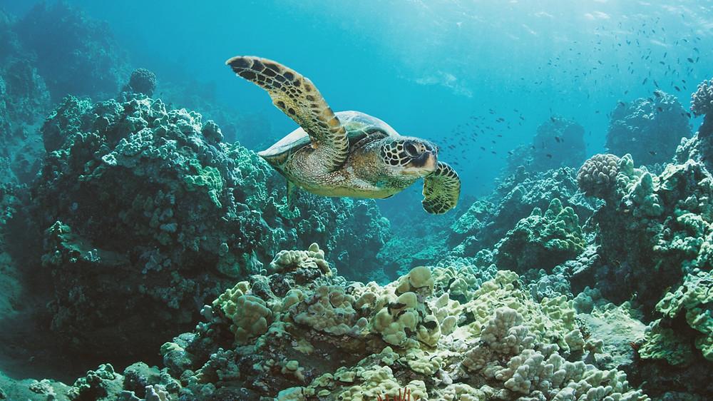 Fondali Marini, Area Marina Protetta Isole Egadi