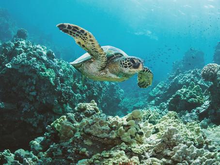 L'Area Marina Protetta Isole Egadi, emblema della biodiversità siciliana