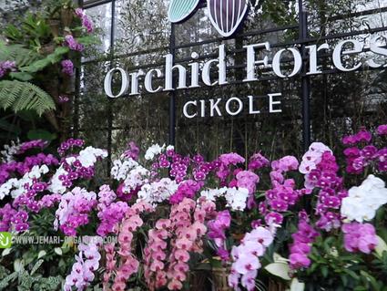 Orchid Forest Cikole Tempat Asyik Buat lokasi Gathering Di Lembang