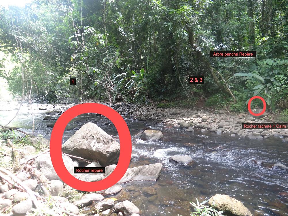 lézarde guadeloupe sentier randonnée de la cascade tambour