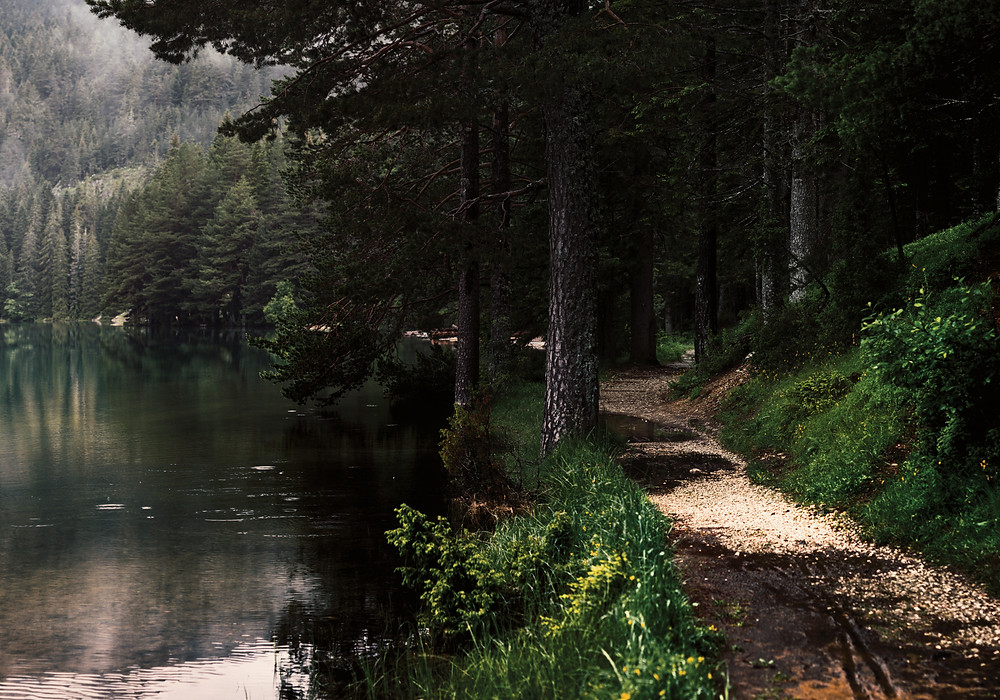 A winding, pine covered path on the edge of the lake.