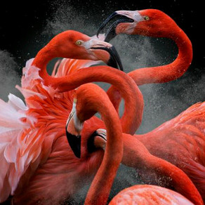 Olympus Bird Photographer of the Year