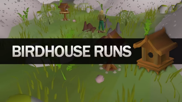 Fastest Hunter Xp In Osrs Ft Thurco In this guide, i show you how to do birdhouse runs. fastest hunter xp in osrs ft thurco