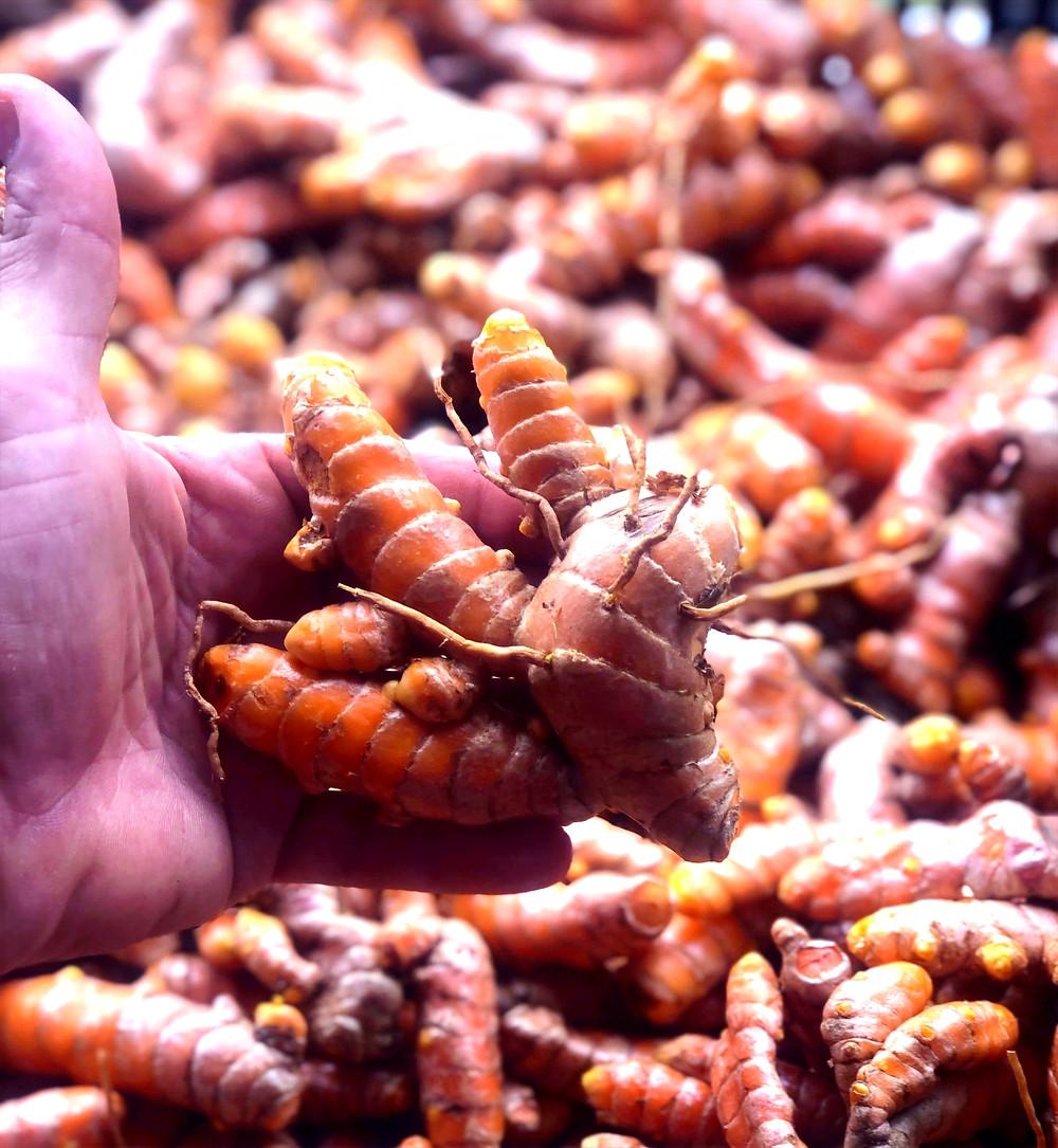 Organic Turmeric root - Curecumin
