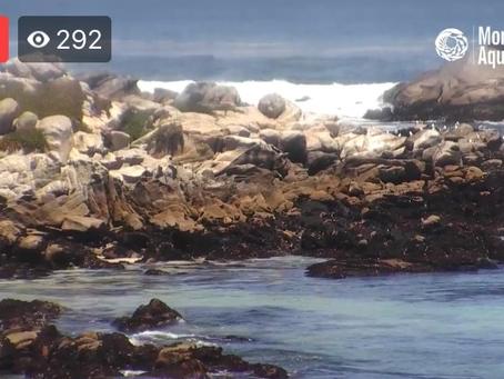 Monterey Bay Cam