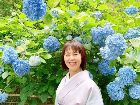 北鎌倉明月院で紫陽花をみてきました。