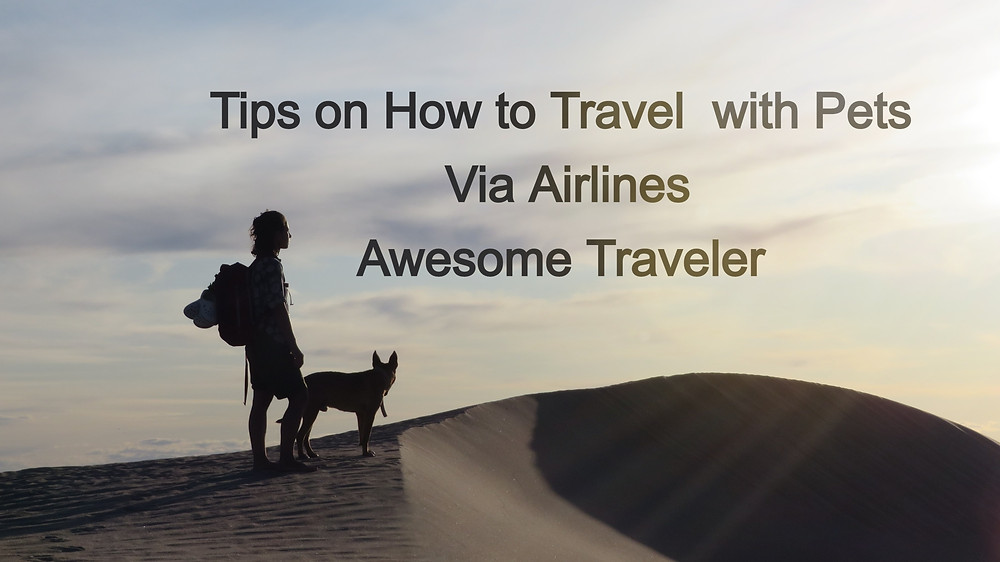 Travel Tips with Pets by Awesome Traveler