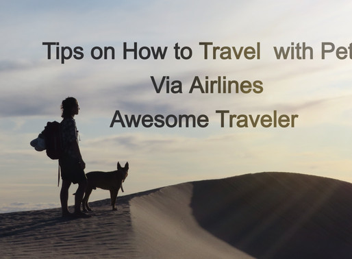 Tips On How To Travel With Pets Via Airlines