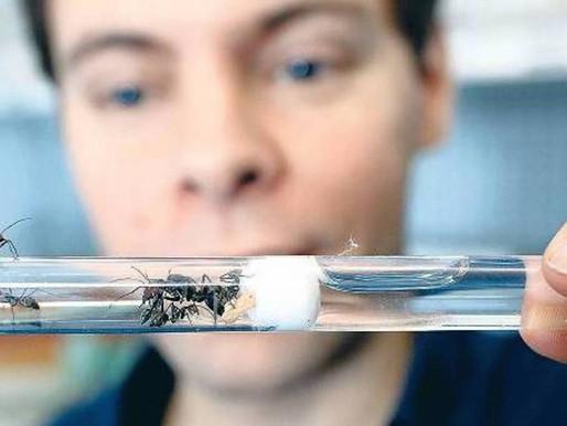 Ganarse la vida vendiendo Hormigas?