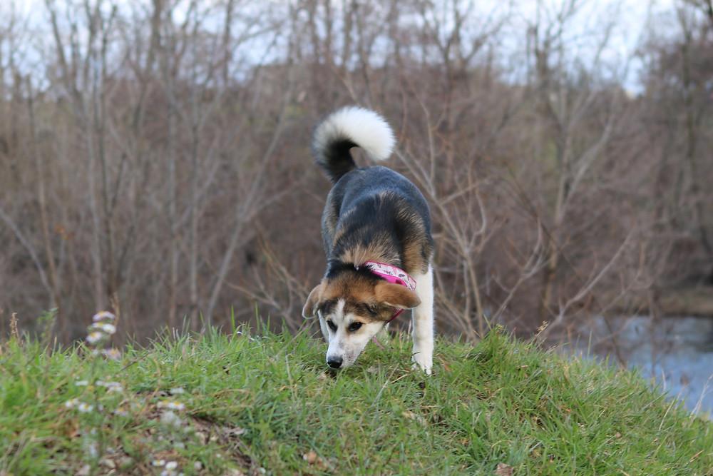 chien communication odeur