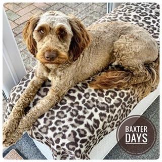 Baxter Days
