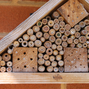 Do you have bee hotels?