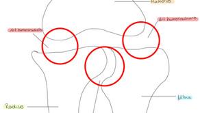 Art. cubiti - das Ellenbogengelenk