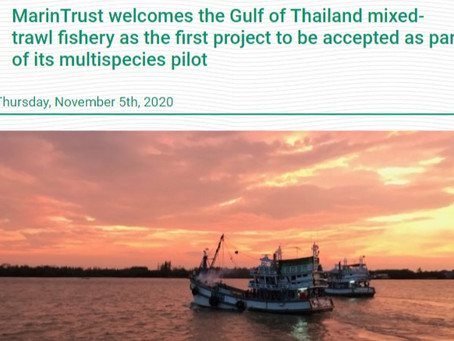 MarinTrust officially congratulates the Gulf of Thailand mixed-trawl fishery as the first project.