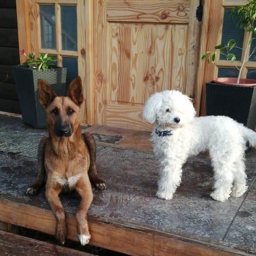 Perros amigos lola y quincy adopta recoge cuida ama