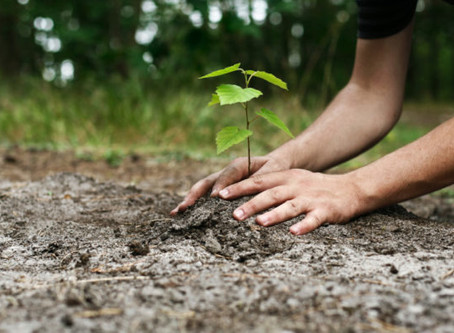 Flexiteek set to fund the planting of 1000 trees in time for Miami International Boat Show.