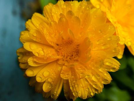 The sunshine flower.