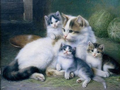 Кошачья судьба