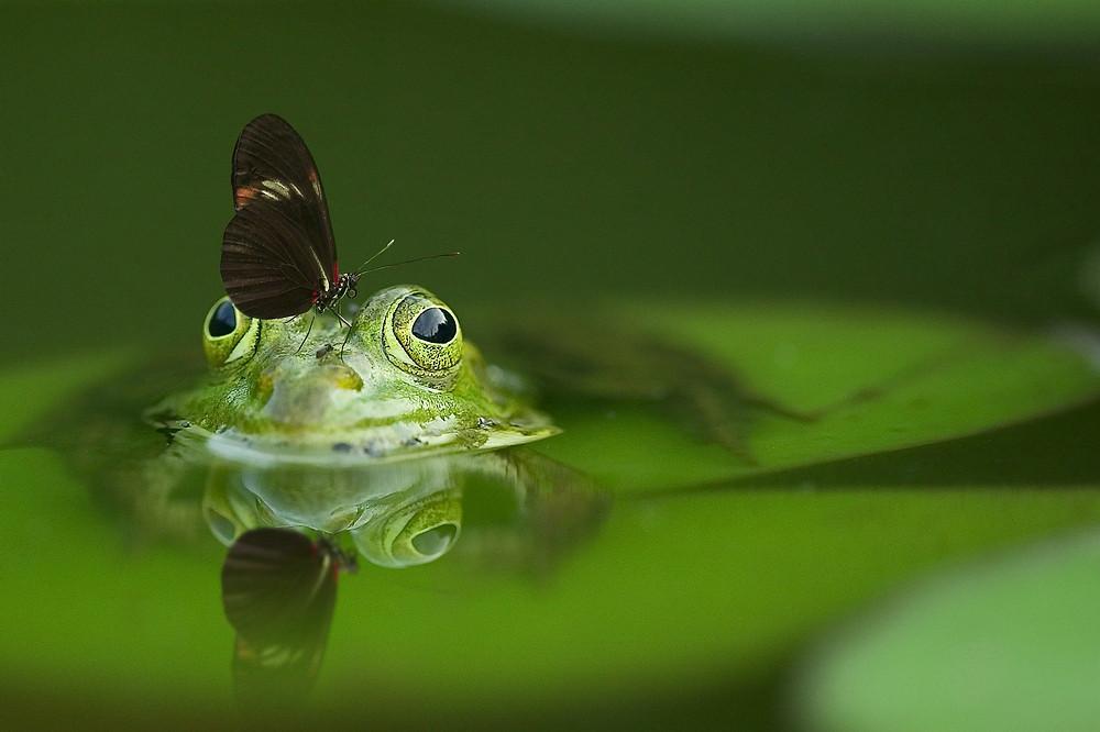 La grenouille habituée, métaphore, hypnose, thérapie