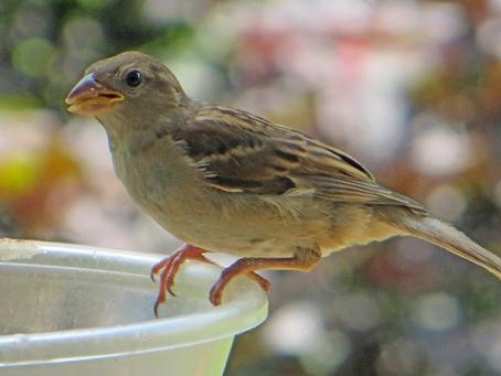Case Study - Lucky Sparrow!